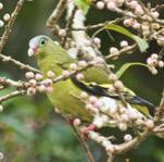 pictures@khao YaiNews. News & Wildlife photography Khao Yai