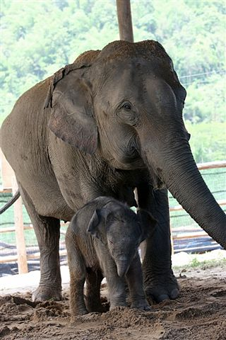 Elephant conservation fund in Khao Yai