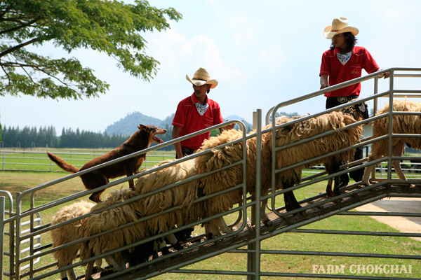 Farm Chok chai tours in Khao Yai